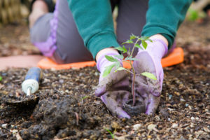 gardening gloves in dirt